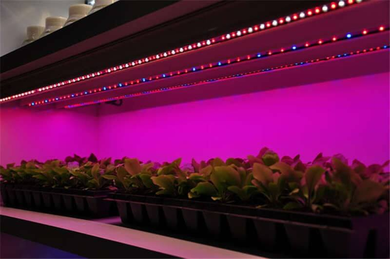 RGBW LED Strip Lights in a Greenhouse